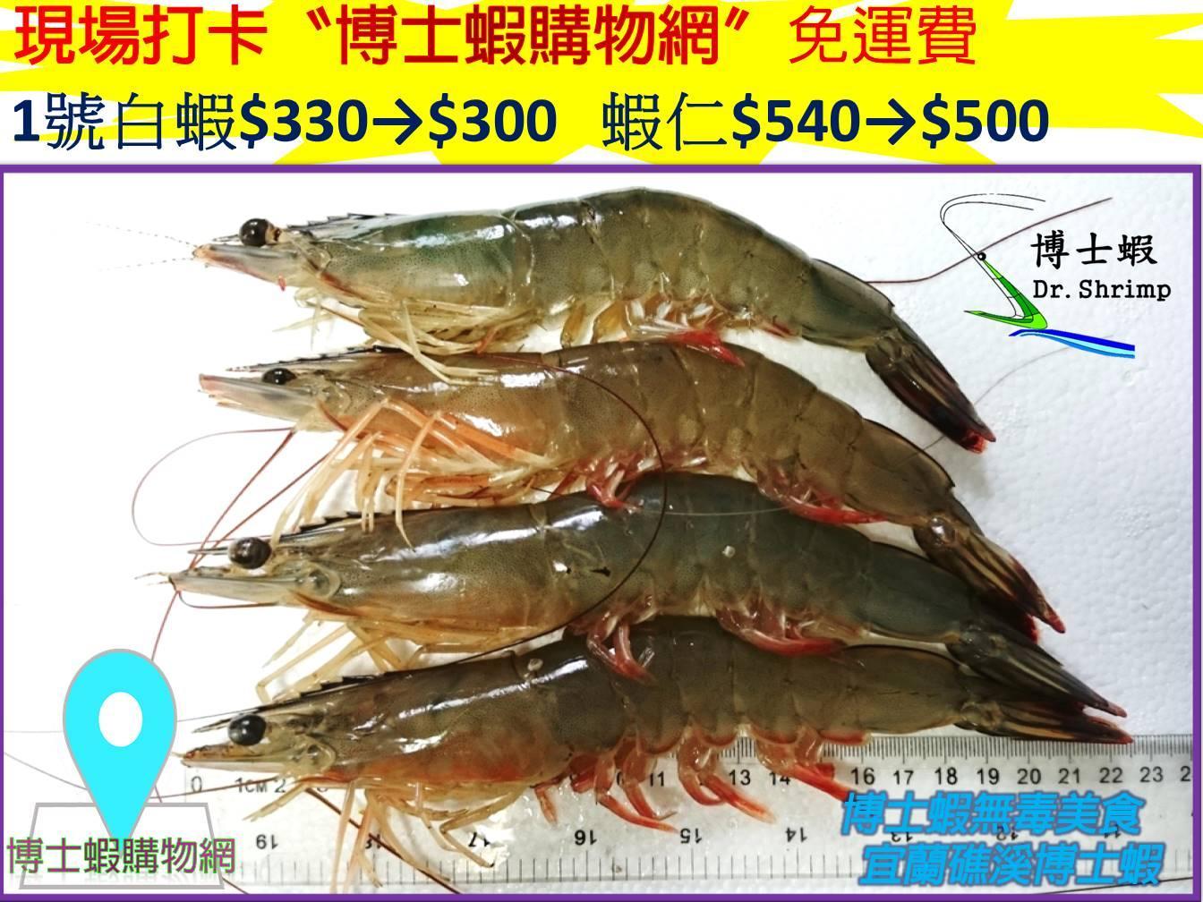 白蝦系列~1號白蝦